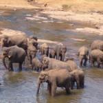 Sri Lanka Reise - Rundreise durchs Paradies