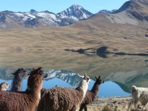 Llamas an Tunisee, Hintergund Cerro Austria