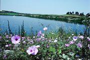 Naturschutzgebiet Ichkeul - Unesco Weltnaturerbe