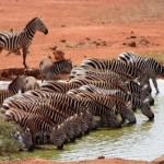 Tanzania - Wildlife Pur Safari & Badeurlaub Sansibar