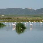 Andalusiens Naturschutzgebiete Fuente de Piedra und el Torcal
