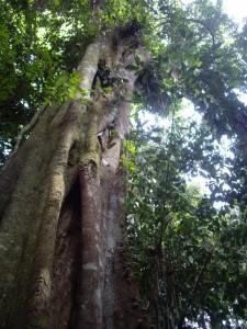 Wanderung im Dschungel in Pañacocha