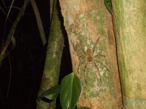 Nachtwanderung Spinne
