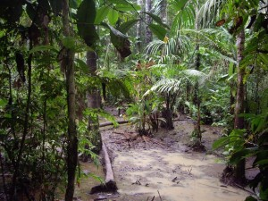 Sumpfstück Cuyabeno Nationalpark