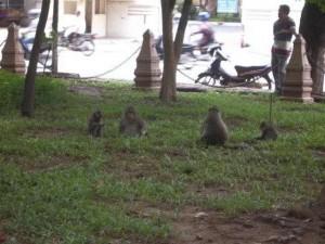 Eine Gruppe von Affen am Wat Phnom in Phnom Penh