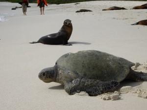 Galapagos Inseln Ecuador