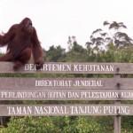 Eine Reise nach Borneo: Unterwegs im Rückzugsgebiet der letzten Orang Utans