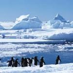 Reise in die Antarktis und Südgeorgien: Unterwegs zu den letzten Tierparadiesen