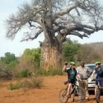 Südafrika mit Mountainbikes - Auf Safari in der Limpopo Provinz