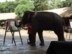 Elefantencamp in Chiang Mai Thailand