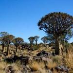 Namibia Selbstfahrerreise – Etosha, Kalahari, Namib, Damaraland und das Waterberg Plateau