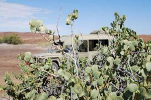 Selbstfahrer Namibia Rundreise