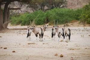 etosha nationalpark namibia