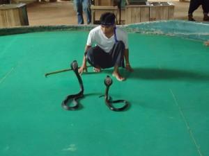 Schlangenfarm Chiang Mai Thailand