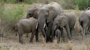 Elefanten im Kruger Park