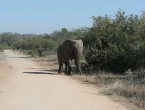 elefant selbstfahrer