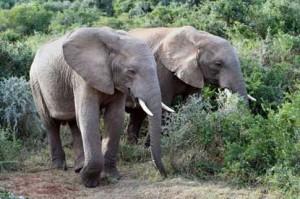 elefanten kruegerpark sueda