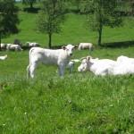 Burgund Urlaub, Individualreise durch das ländliche Frankreich
