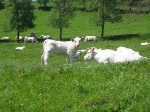 Burgund Urlaub im ländlichen Frankreich
