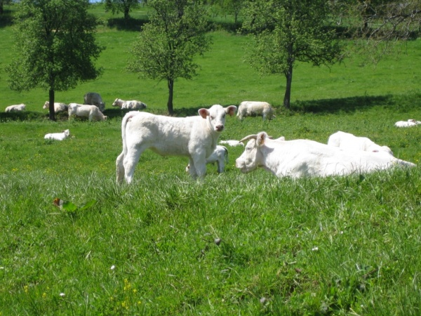 frankreich lavendelfelder urlaub