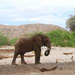 Namibia Kleingruppenreise vom Himba und Buschmann Land ins Okaukuejo Rastlager