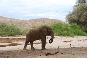Elefant Namibia Kleingruppenreise