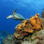 Mexiko Tauchurlaub: Cenoten + Walhaie + Riffe