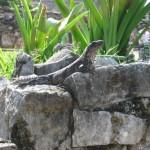 Mietwagenrundreise Mexiko: Cancún - Tulum - Calakmul - Palenque – San Cristobal de las Casas. 1.Teil der Reise