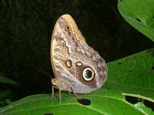 Schmetterling in La Quinta