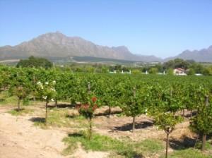 Weinbaugebiete Kapregion Südafrika