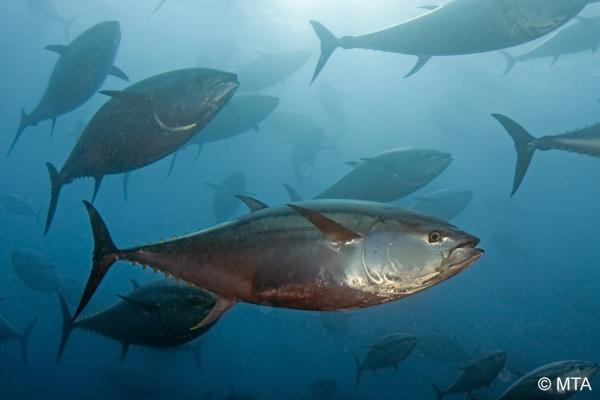 Unterwasserwelt Malta
