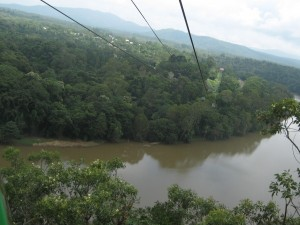 Sicht aus der Skyrail Gondel auf den autralischen Regenwald