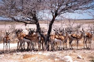 Botswana singlereise Tierherde