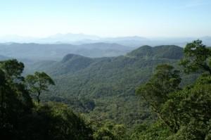 Grüner Küstenregenwald bis an den Atlantik