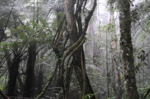 Baumfarne im Amboro Nationalpark