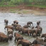 Sri Lanka Urlaub - Pinawela