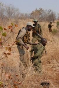 Wilderer sind den Rangern in die Falle gegangen