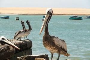 Am Strand von Paracas