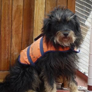 Der Hund Tenor auf dem Windjammer
