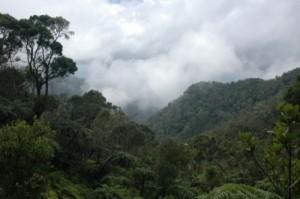 Sierra Maestra, Kuba, die Wolken holen uns unterwegs zum Pico Turquino ein