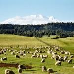 Aktive Neuseeland Reise
