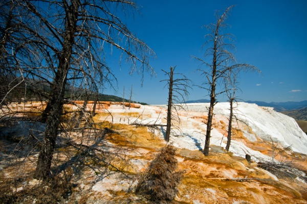 Mammoth Hot Springs, Angels Terrace