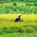 Unterwegs in Indochina – Kombinationsreise durch Vietnam, Laos und Kambodscha