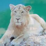 Urlaubsreise - der Sasan Gir Nationalpark in Gujarath