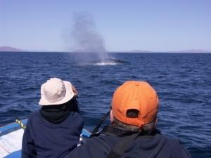 Whale Watching Mexiko Erlebnis