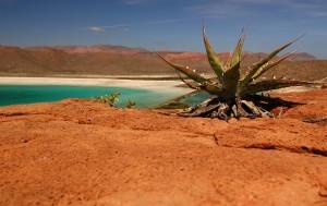 Wüste bei der Sea of Cortes