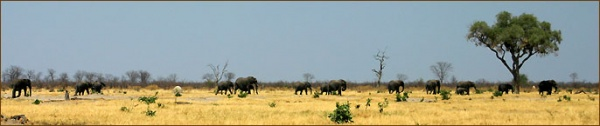 Elefantenherde im Chobe Nationalpark