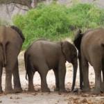 Unsere Namibia Familienreise von der Kalahari Wüste bis zum Etoshapark