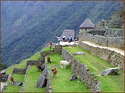 Besuch der Inkastadt Machu Picchu