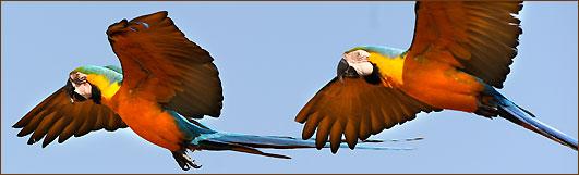 Papageien auf meiner Südamerika Rundreise